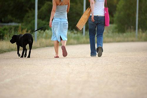 people walking a black dog