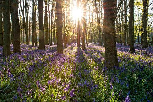 sunbeams coming through trees