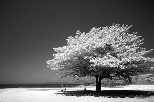 black and white picture of a large tree with shade
