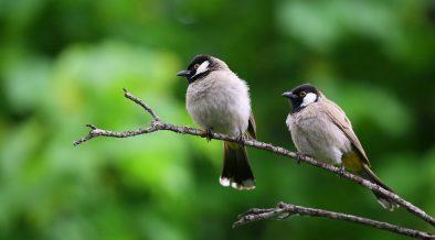 how to make fat balls for birds garden benches blog. Black Bedroom Furniture Sets. Home Design Ideas