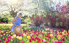 norht facing gardenw ith woman walking amongst flowers