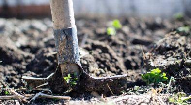 shovel digging soil up in an overgrown garden