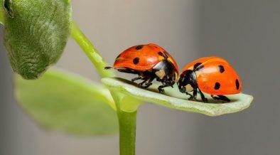 ladybirds on a leaf in a bug hotel