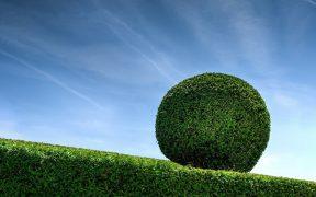 round hedge